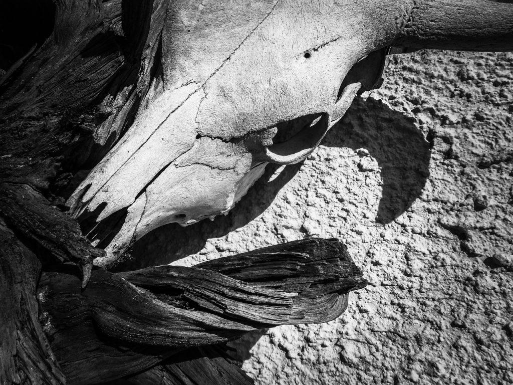 Más de dos mil bovinos han muerto a causa del verano