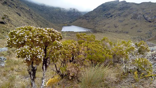 Laguna Colorada: Páramo de Santurbán