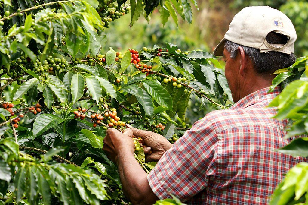 La Agricultura Colombiana En El Contexto De La Globalizacion
