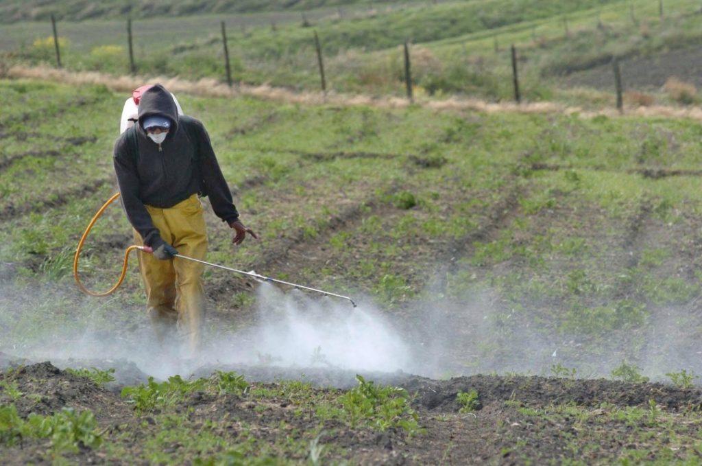 Foto: www.biofabrica.com.mx