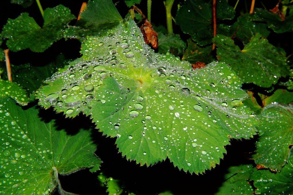 leaves-1466461_1280