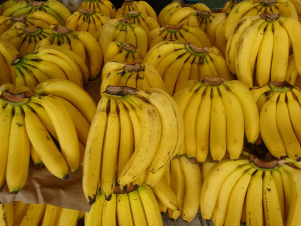 Banano común. Foto: Wikipedia.