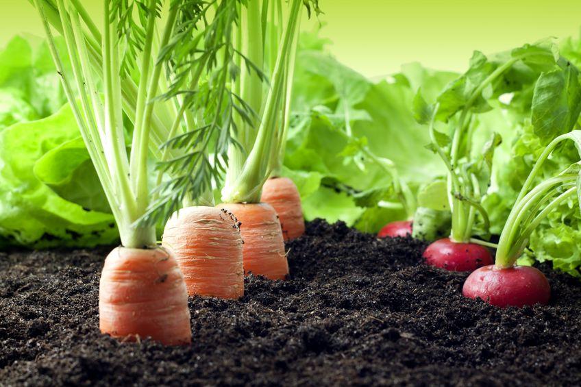 Agricultura Orgánica